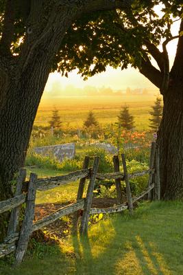 Coucher de soleil avec arbres et clôture en contre-jour