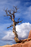Lonely tree in the clouds at Arches National Park Park Avenue, Utah, USA
